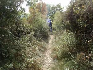 Camino Almazorre-Lecina, antes del desbroce