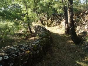 Desbroce en el camino de Lecina a Betorz